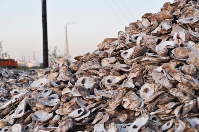 Oyster Pile
